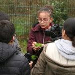 Récolte de la menthe plantée par les jeunes dans le jardin partagé du CSC.